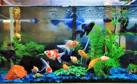Chennai fish aquarium 1000 aquarium ideas for Fish tank deals